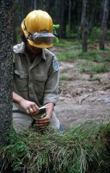 Youth Conservation Corp worker working to rehab & revegetate a backcountry campsite on Shoshone Lake Photo