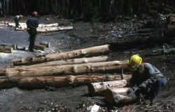 Youth Conservation Corp workers making bumper logs (debarking) Photo