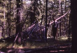 Wickiup leaning near the Osprey Falls trail - History - Indians Photo