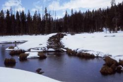 Beaver lodge at Stillwater Fork of Bear River, Utah in winter Photo