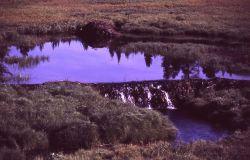 Beaver dam in Canyon area Photo