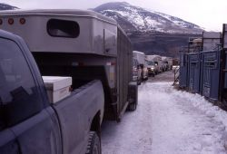 Trailers waiting to be loaded with bison - Stephens Creek Photo