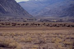 Stephens Creek bison pens Photo