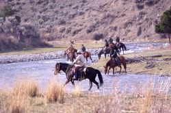 Wranglers watering horses & crossing Gardner River - bison release Photo