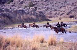 Wranglers crossing Gardner River at Chinese Garden - bison release Photo