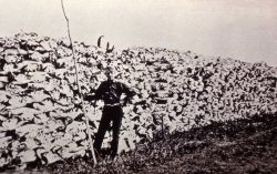 Copy of photo of hugh stack of bison skulls to be used for fertilizer Photo