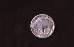 The buffalo (bison) nickel Photo