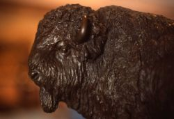 Bronze bison statue Photo