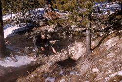 Black bear den in the Old Faithful area Photo