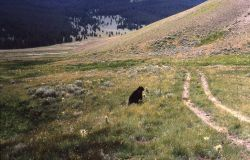 Black bear release Photo