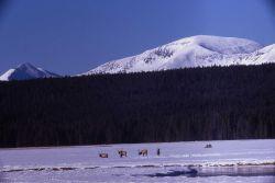 Elk near Elk Park in winter Photo