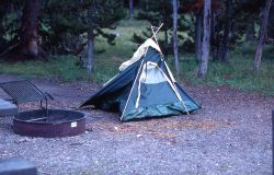 Tent that was jumped on by a grizzly bear (nicknamed Kelty) in Indian Creek campground Photo