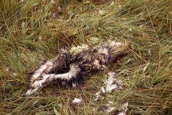 Eaten porcupine Photo