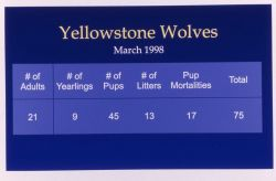 Map of wolf total numbers Photo