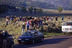 Wolf watchers at Soda Butte Creek Photo