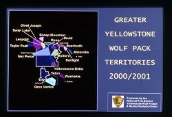 2000 - 2001 Greater Yellowstone wolf pack territories Photo