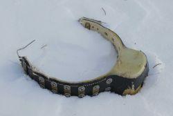Wolf collar Photo