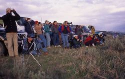 People watching wolves in Lamar Valley Photo