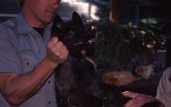 Mike Phillips holding wolf pup Photo