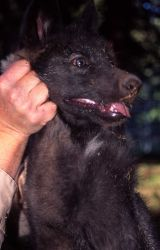 Mark Johnson holding wolf pup Photo