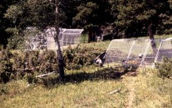 Rose Creek wolf pen damage Photo