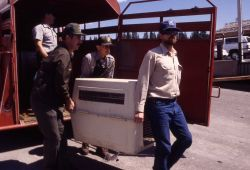 Unloading trailer with Trail Creek wolves Photo