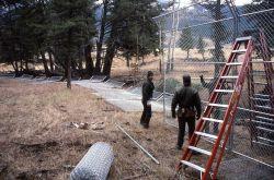 Building wolf enclosure at Soda Butte Pen Photo