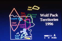 Wolf pack territory - map Photo