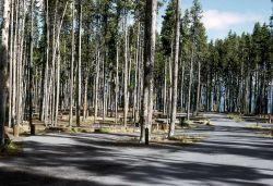 Deserted Grant Village campground Photo
