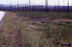 Fourth in a series of five taken after the 1988 fires - 2.85 miles east of Yellowstone's west gate Photo