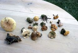 Assorted mushrooms Image