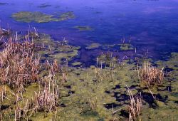 Algae growth at margins of tepid pool Image