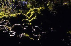 Moss on rocks Photo