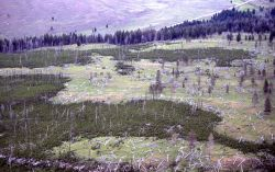 Aerial view of 13 year old lodgepole pine forest above Lava Creek Image