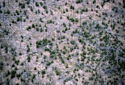 Aerial view of lodgepole pine forest Image