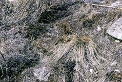 Cropped grass on winter range Photo