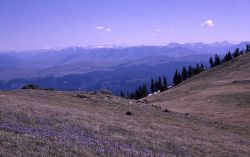 Alpine meadow on Mt Washburn Image