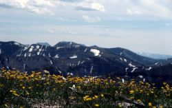 Alpine meadows of Avalanche Peak Image