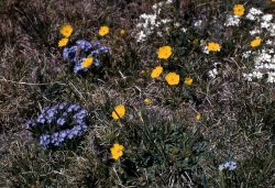 Alpine flowers Image