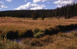Stream & meadow habitat Photo