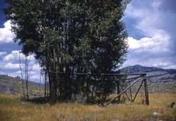 Aspen plot -25 Image