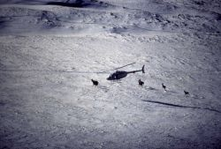 Tracking elk from helicopter Photo