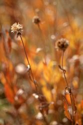 Drying plants with fall colors Photo