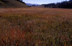 Grass in fall color phase at Yancey's Hole Photo