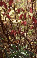 Fall color Photo