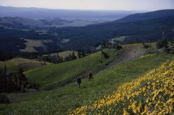 Ascent of Electric Peak with hikers & flowers Image