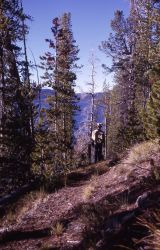 Along trail by Shoshone Lake Image