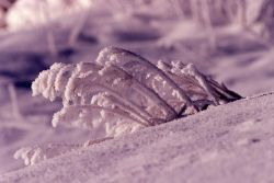 Frost on grass in Lamar Valley in the winter Photo
