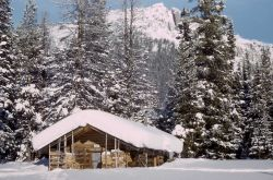Fox Creek patrol cabin in the winter Photo
