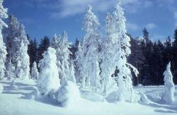 Frost & snow covered trees in winter Photo